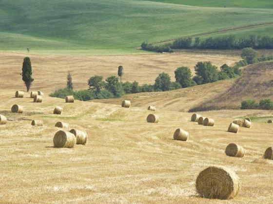 Podere Il Biancospino 4 tot 10 per, een van onze vakantiehuizen in Toscane